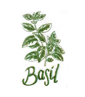 Basil Sketch design from paint. 340 w x 300 h 72 dpi